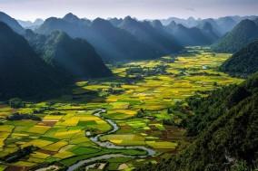 Tapiz de cultivos de arroz