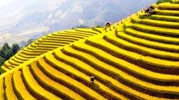 Bancales de cultivos