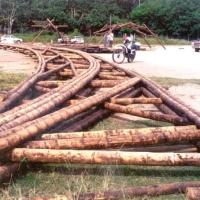 Claves constructivas para puentes de bambú.